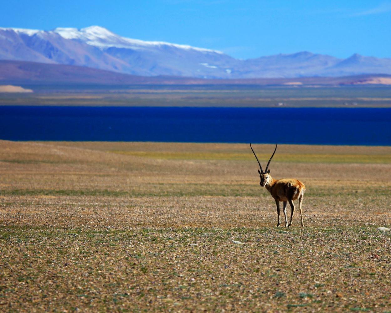 可可西里羚羊保护区